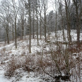 Foto Friday: First Snow of Winter...in March