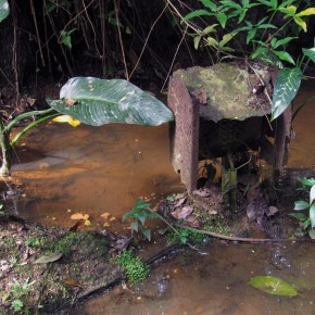 Jurong Line: Wildlife and Old Times in the Forest