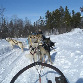 Foto Friday: Dog-sledding in Kiruna